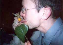 Stef titillates fruit